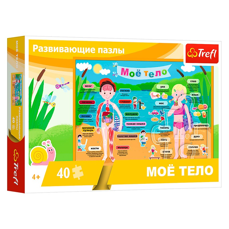 15528 Trefl 40 Educational Corpul